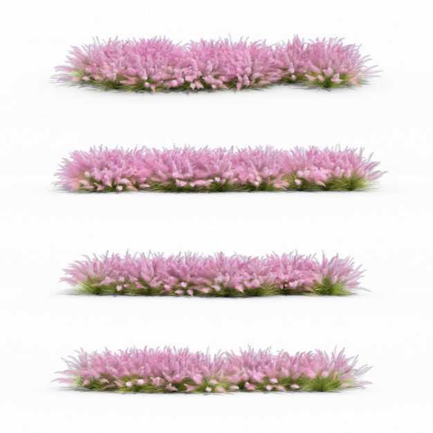 四款3D渲染的粉黛乱子草草丛绿植观赏植物6261646png图片免抠素材