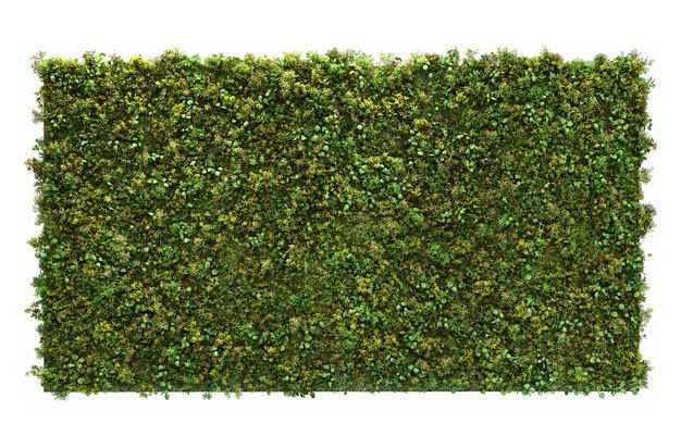 3D渲染的方形龟甲冬青盆栽园艺绿植灌木丛观赏植物9495516png图片免抠素材