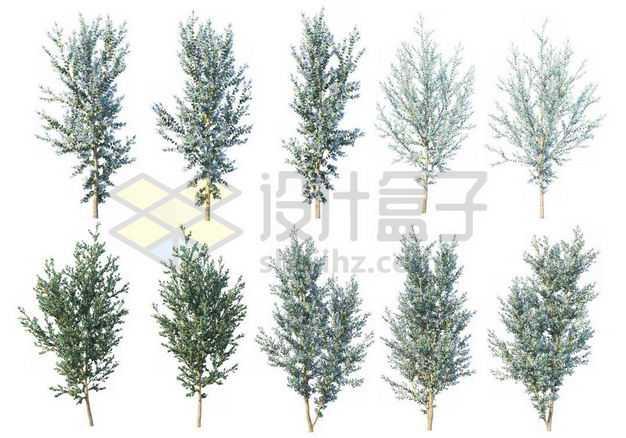 十款白杨树大树树绿植园林植被观赏植物4085589图片免抠素材