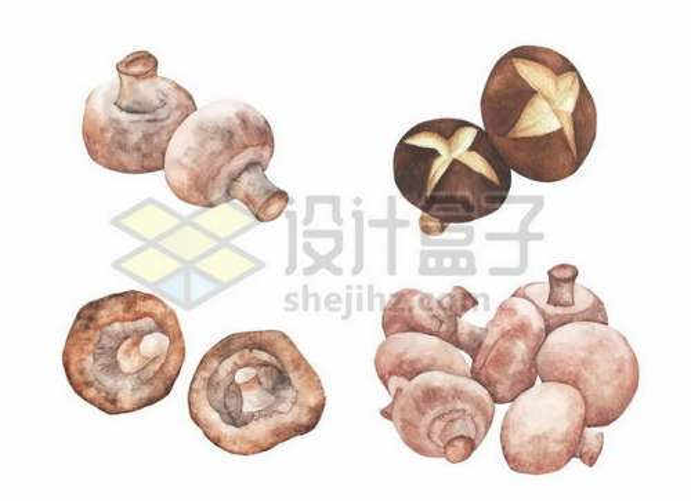 各种香菇蘑菇彩绘插画6593516png图片免抠素材