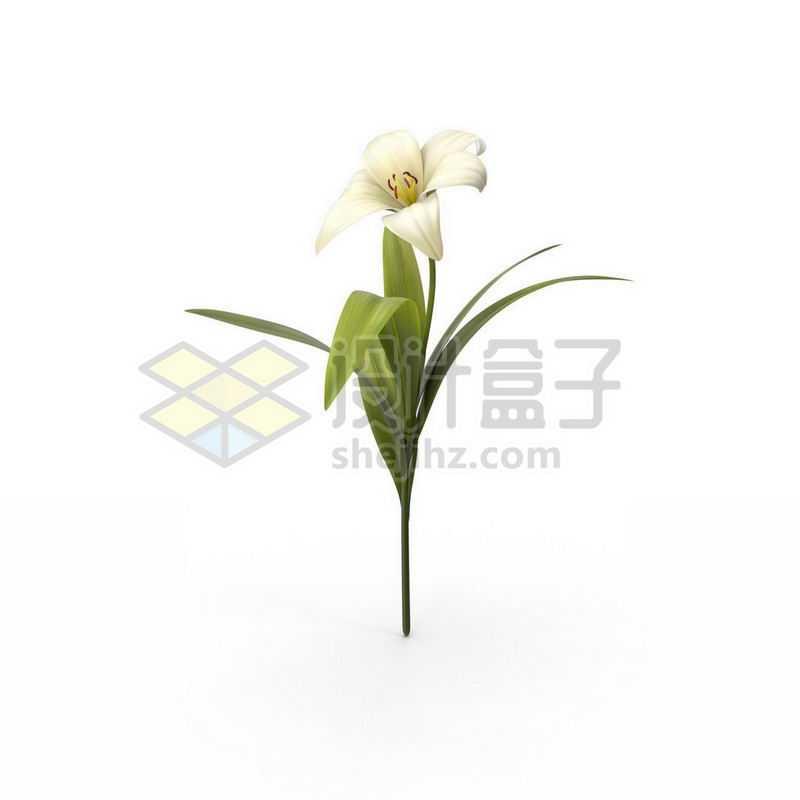 一只带叶子的白色百合花鲜花7751588图片免抠素材