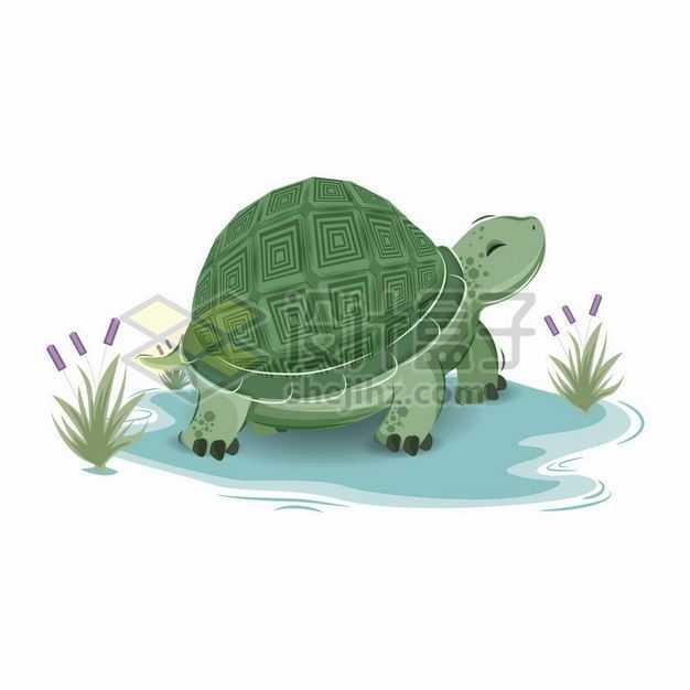 卡通乌龟绿毛龟手绘插画6175968png图片免抠素材