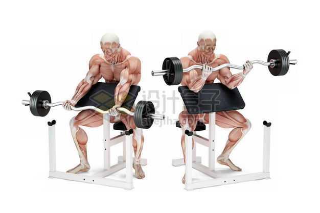 举杠铃举重的男性人体肌肉模型全身肌肉组织解剖示意图5959967图片免抠素材