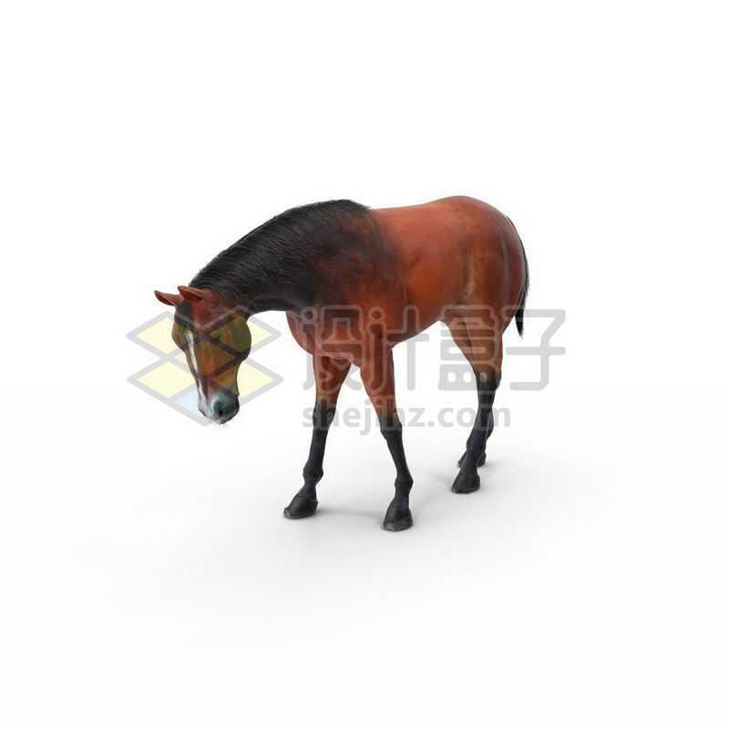 3D立体高清低头的白色骏马6451204图片免抠素材