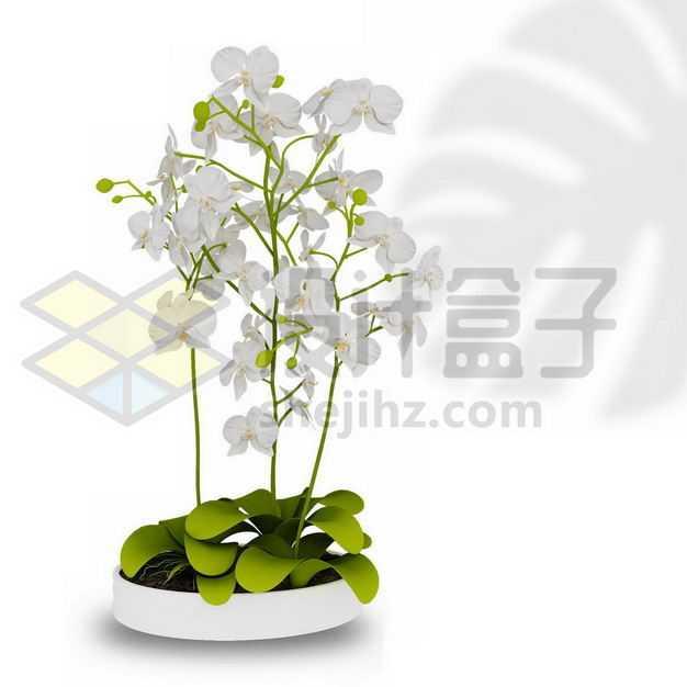白色陶瓷花盆中的白色蝴蝶兰花朵室内观赏植物3045636PSD图片免抠素材