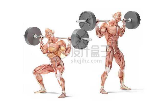 两款男性人体肌肉模型正在杠铃颈后推举健身房动作3151120图片免抠素材