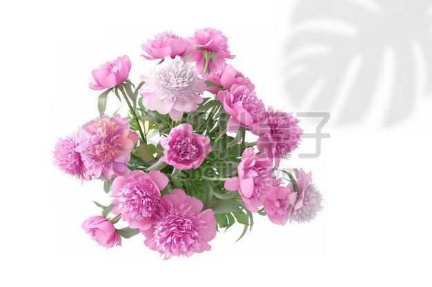 红色芍药花卉花朵鲜花室内观赏植物1689871PSD图片免抠素材