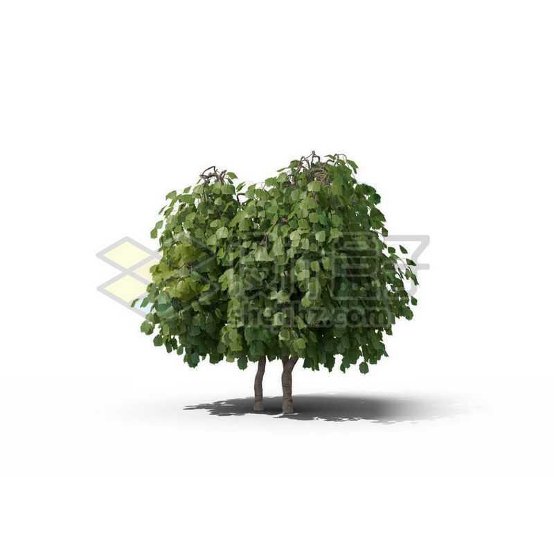 一棵绿色的菩提树景观树木大树2292698图片免抠素材