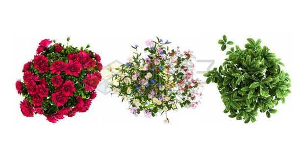 洋桔梗蛾蝶花麒麟掌等花卉花朵鲜花室内观赏植物9279700PSD图片免抠素材