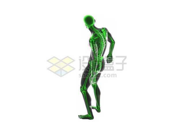 3D立体绿色人体骨骼骨架和黑色人体模型1725203图片免抠素材