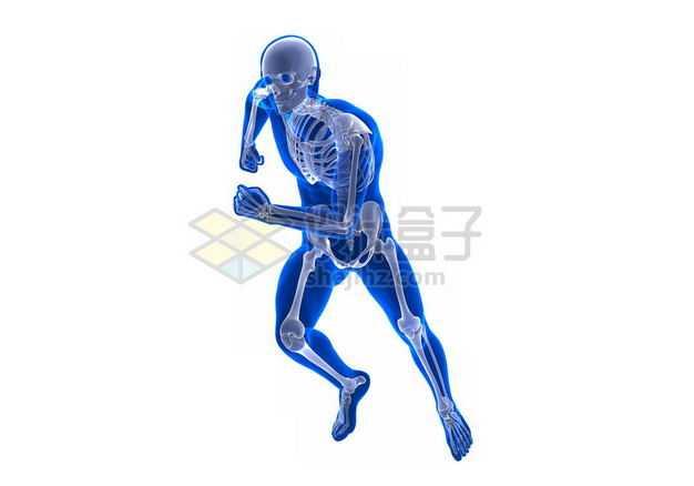 奔跑的3D立体人体骨骼骨架和蓝紫色人体模型7050148图片免抠素材
