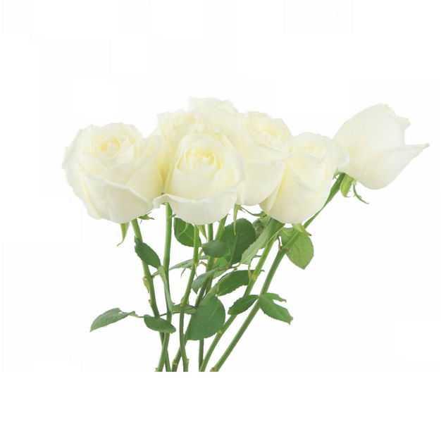 一大束带叶子的白玫瑰花鲜花白色花朵705635png图片免抠素材