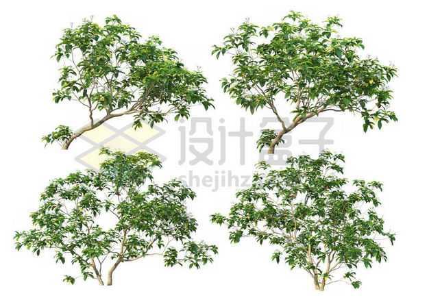 四棵榉树大树树绿植园林植被观赏植物8227430图片免抠素材