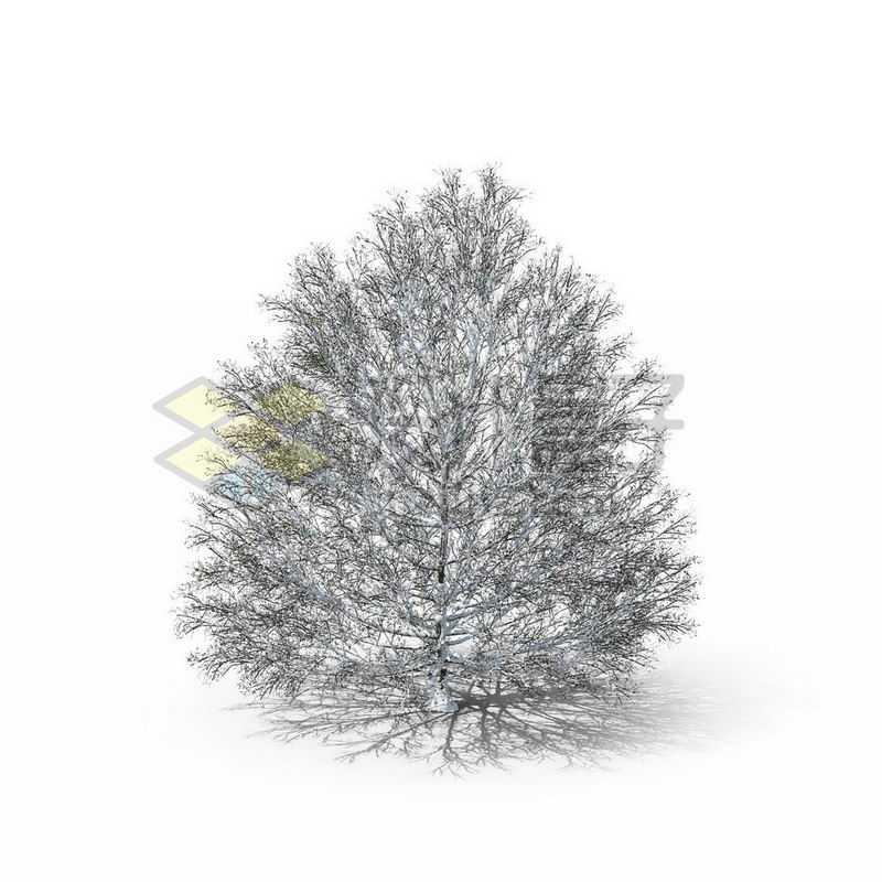 冬天北方大雪后的大树雾凇4898041图片免抠素材