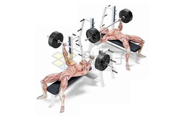 3D立体躺在哑铃凳上举重卧推的人体肌肉组织示意图9096249免抠图片素材
