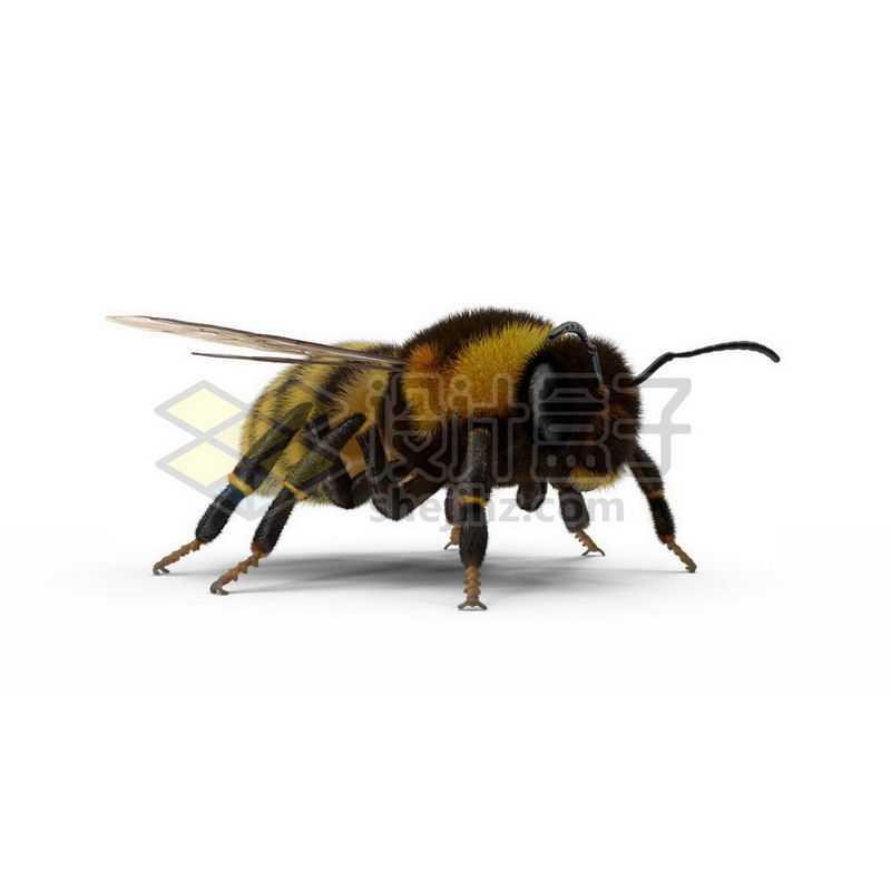 3D立体高清小蜜蜂小动物9898199图片免抠素材
