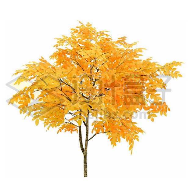 秋天树叶黄了的无患子大树8801723PSD图片免抠素材