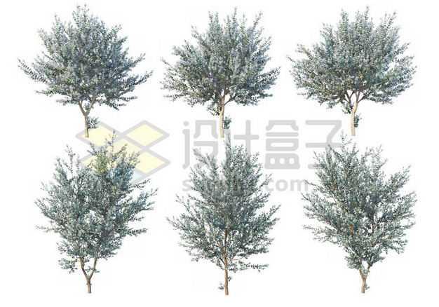 六棵毛白杨大树树绿植园林植被观赏植物5899132图片免抠素材