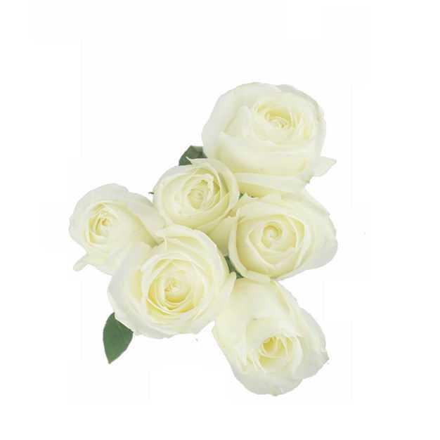 六朵白玫瑰花鲜花白色花朵690701png图片免抠素材