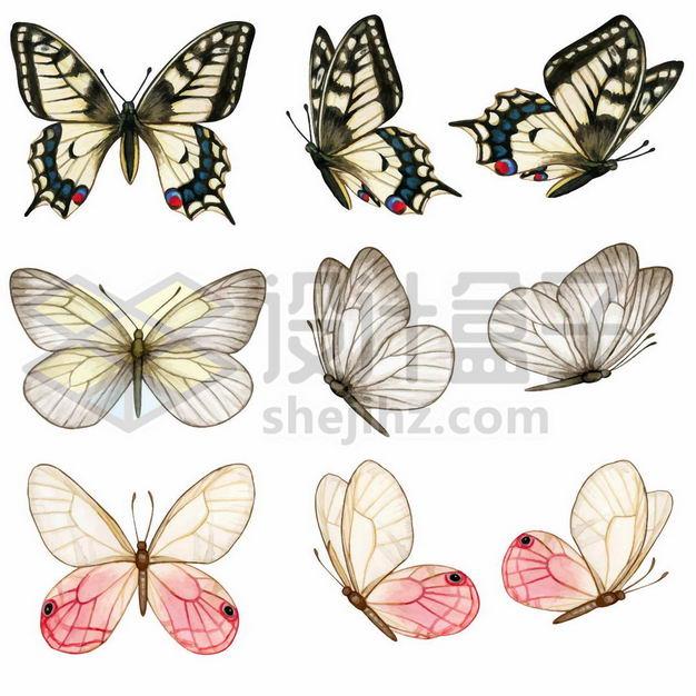 九款彩色蝴蝶彩绘插画3845133png图片免抠素材 生物自然-第1张