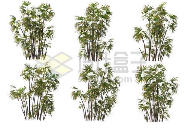 六丛郁郁葱葱的多裂棕竹绿植园林植被观赏植物3344388图片免抠素材