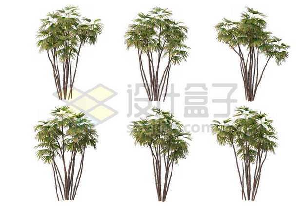 六丛郁郁葱葱的多裂棕竹绿植园林植被观赏植物9027914图片免抠素材