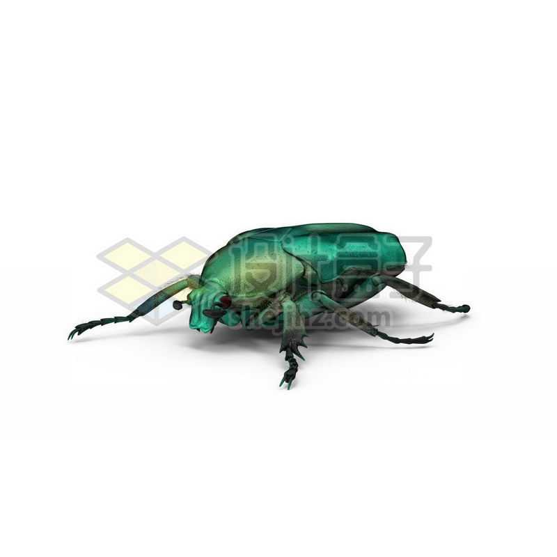 3D立体高清金龟子甲虫小动物2591669图片免抠素材