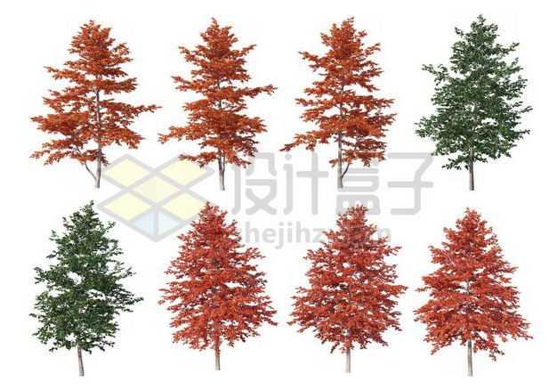 八棵红枫树榆树大树树绿植园林植被观赏植物7046812图片免抠素材