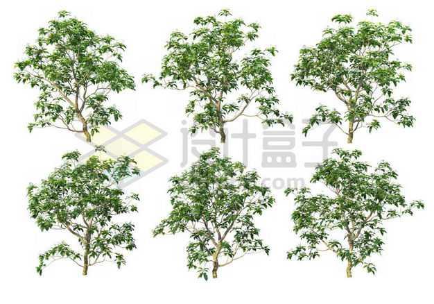 六棵榉树大树树绿植园林植被观赏植物4251420图片免抠素材