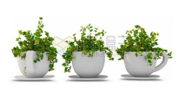 三款茶杯式白色陶瓷花盆中的千叶吊兰室内观赏植物7528936PSD图片免抠素材