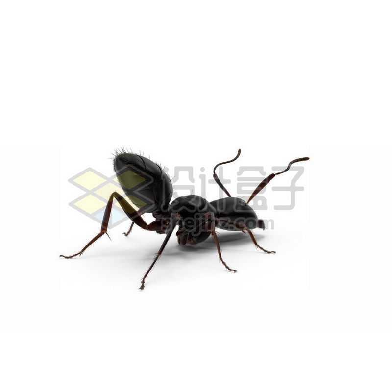 3D立体高清小蚂蚁小动物9264704图片免抠素材