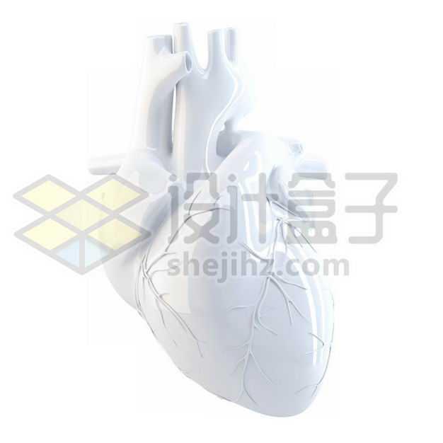 3D立体白色心脏人体器官模型侧面图5282413图片免抠素材