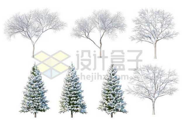 七款冬天积雪的大树雪松等冬季雪景7213584图片免抠素材