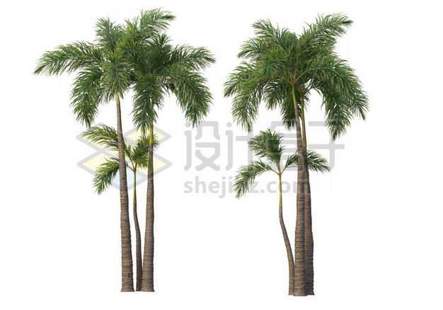 两棵郁郁葱葱的王棕大王椰子树绿植园林植被观赏植物6942192图片免抠素材