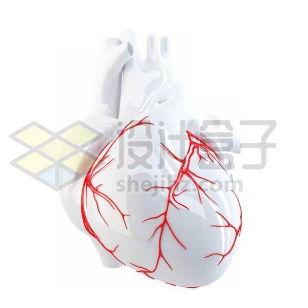 3D立体红色血管的白色人体心脏模型9139977图片免抠素材