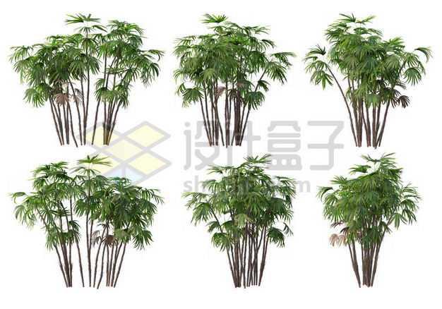 六丛郁郁葱葱的多裂棕竹绿植园林植被观赏植物4395978图片免抠素材
