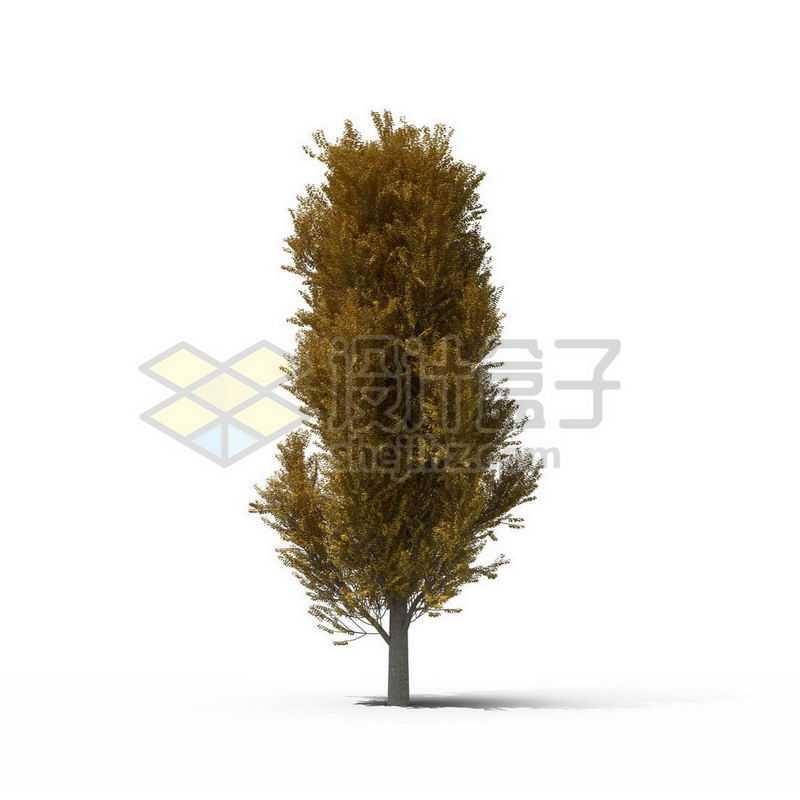 一棵秋天的杨树景观树木大树7450481图片免抠素材