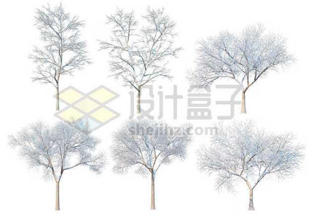 六款冬天积雪的大树等冬季雪景3079739图片免抠素材