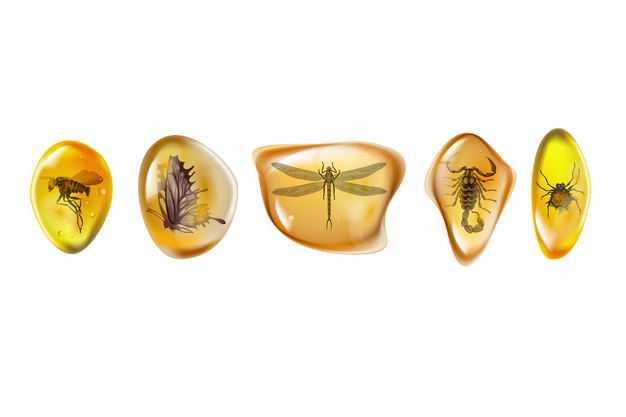 蚊子蝴蝶蜻蜓蝎子蜘蛛等昆虫琥珀化石2860646EPS图片免抠素材