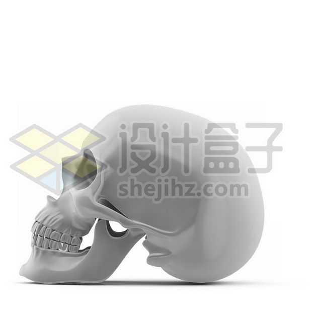 逼真的3D立体白色骷髅头人体骨骼侧面图8304901图片免抠素材