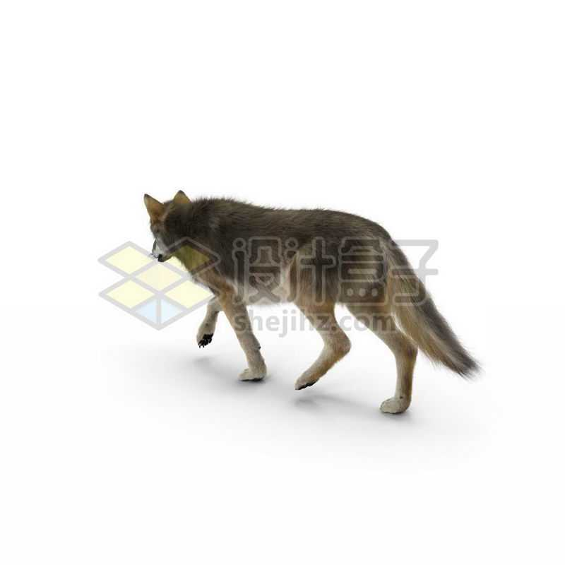 3D立体高清野狼猛兽7579477图片免抠素材