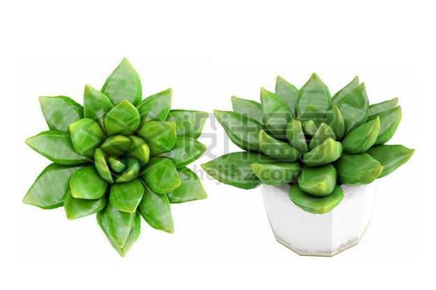 白色陶瓷花盆中的草玉露多肉植物室内观赏植物4219322PSD图片免抠素材