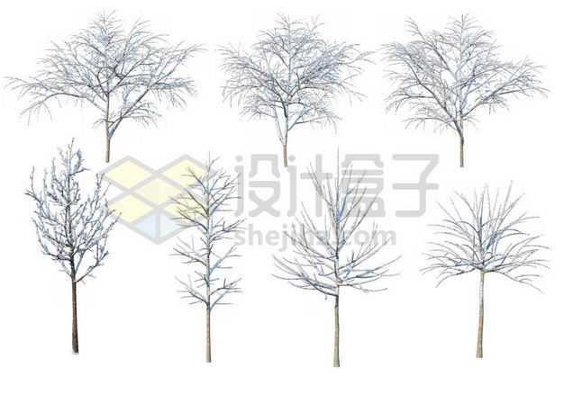 七款冬天积雪的大树等冬季雪景7603591图片免抠素材