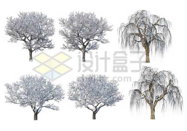 六款冬天积雪的柳树大树等冬季雪景8303760图片免抠素材