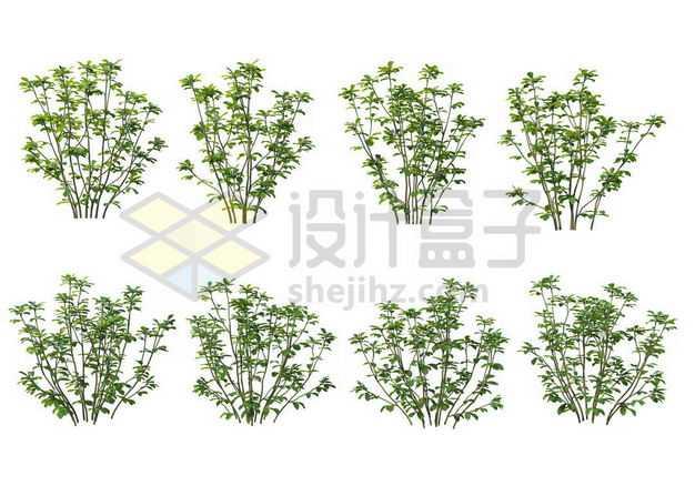 八棵厚朴树枝大树树绿植园林植被观赏植物4281905图片免抠素材