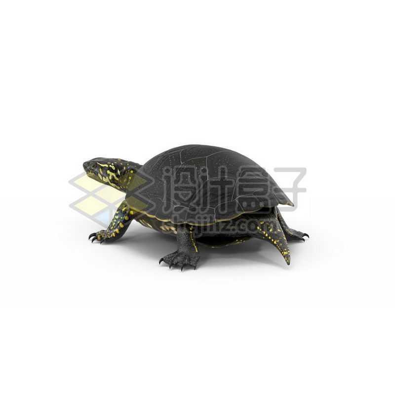 3D立体高清乌龟花龟小动物3603815图片免抠素材