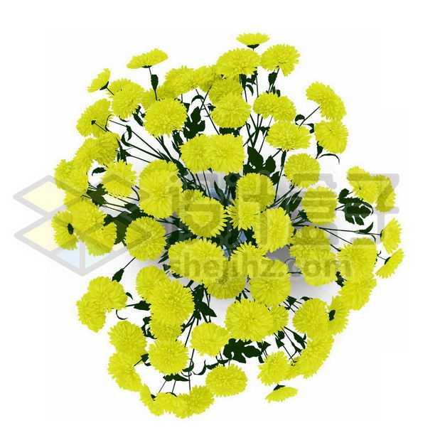 黄色小花杭菊花卉花朵鲜花室内观赏植物2027880PSD图片免抠素材