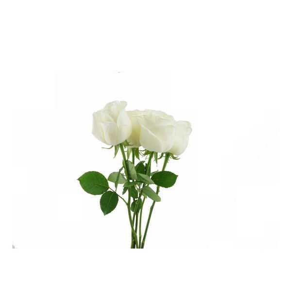 一束带叶子的白玫瑰花鲜花白色花朵290402png图片免抠素材