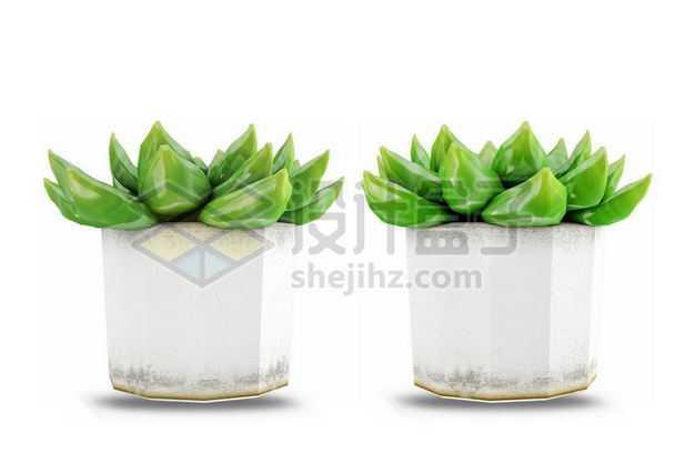 白色陶瓷花盆中的草玉露芦荟多肉植物室内观赏植物6633477PSD图片免抠素材