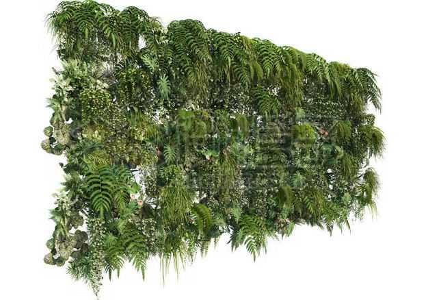 茂盛的热带树叶蕨类植物叶子组成的植物墙装饰2392899图片免抠素材